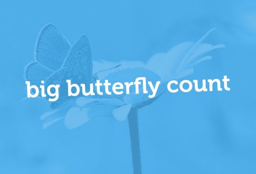 Big Butterfly Count - logo