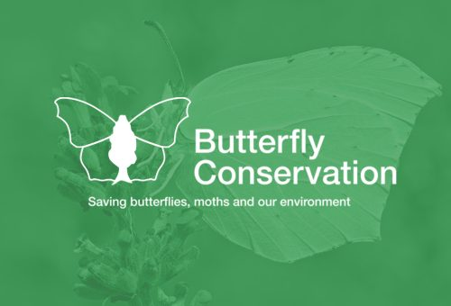 Butterfly Conservation - logo
