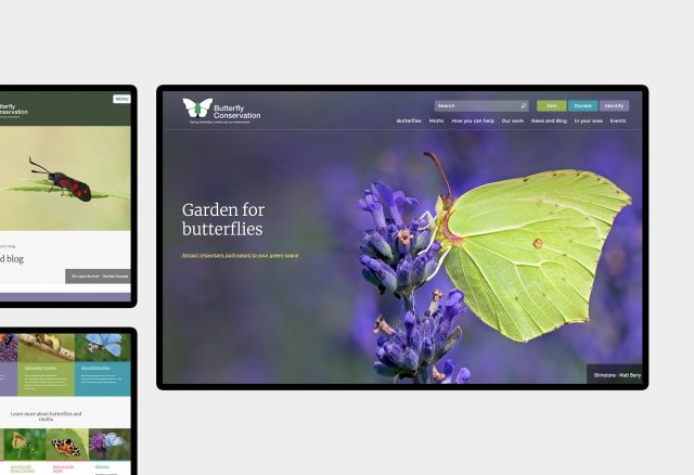 Butterfly Conservation - website design