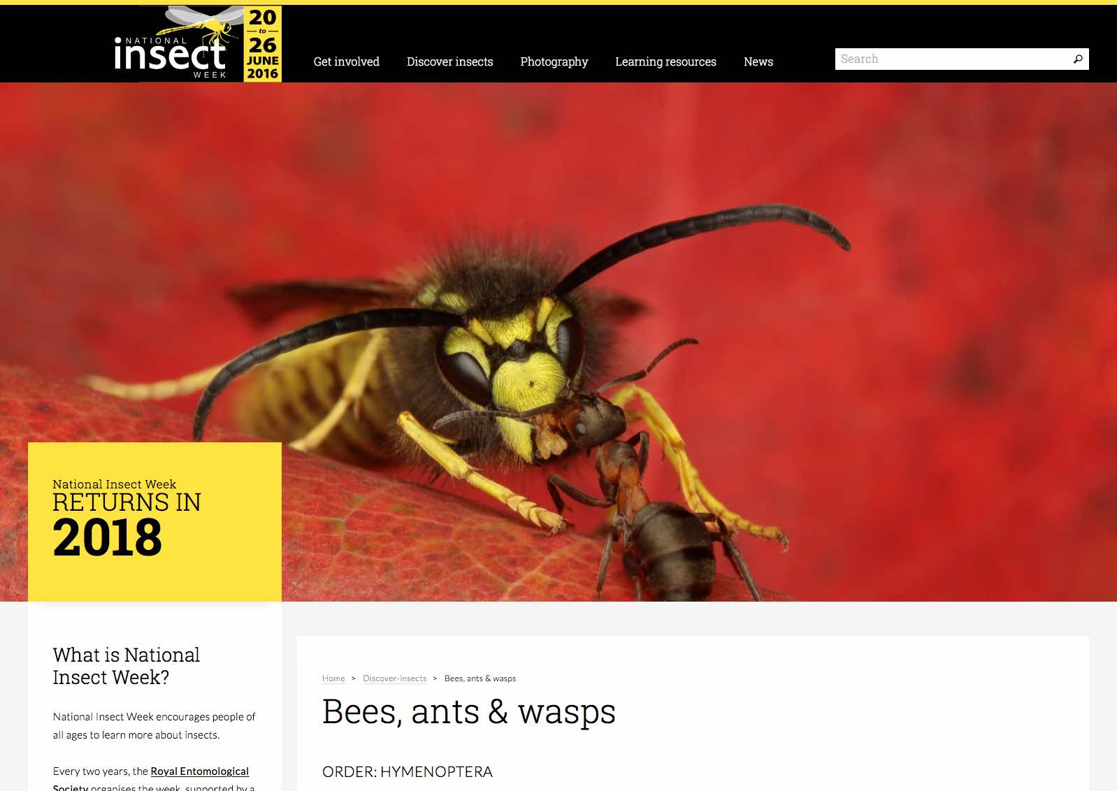 National Insect Week insect details page
