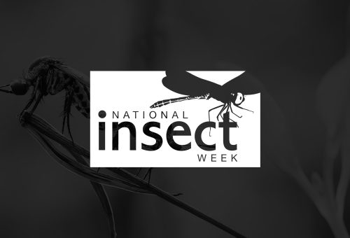 National Insect Week - logo