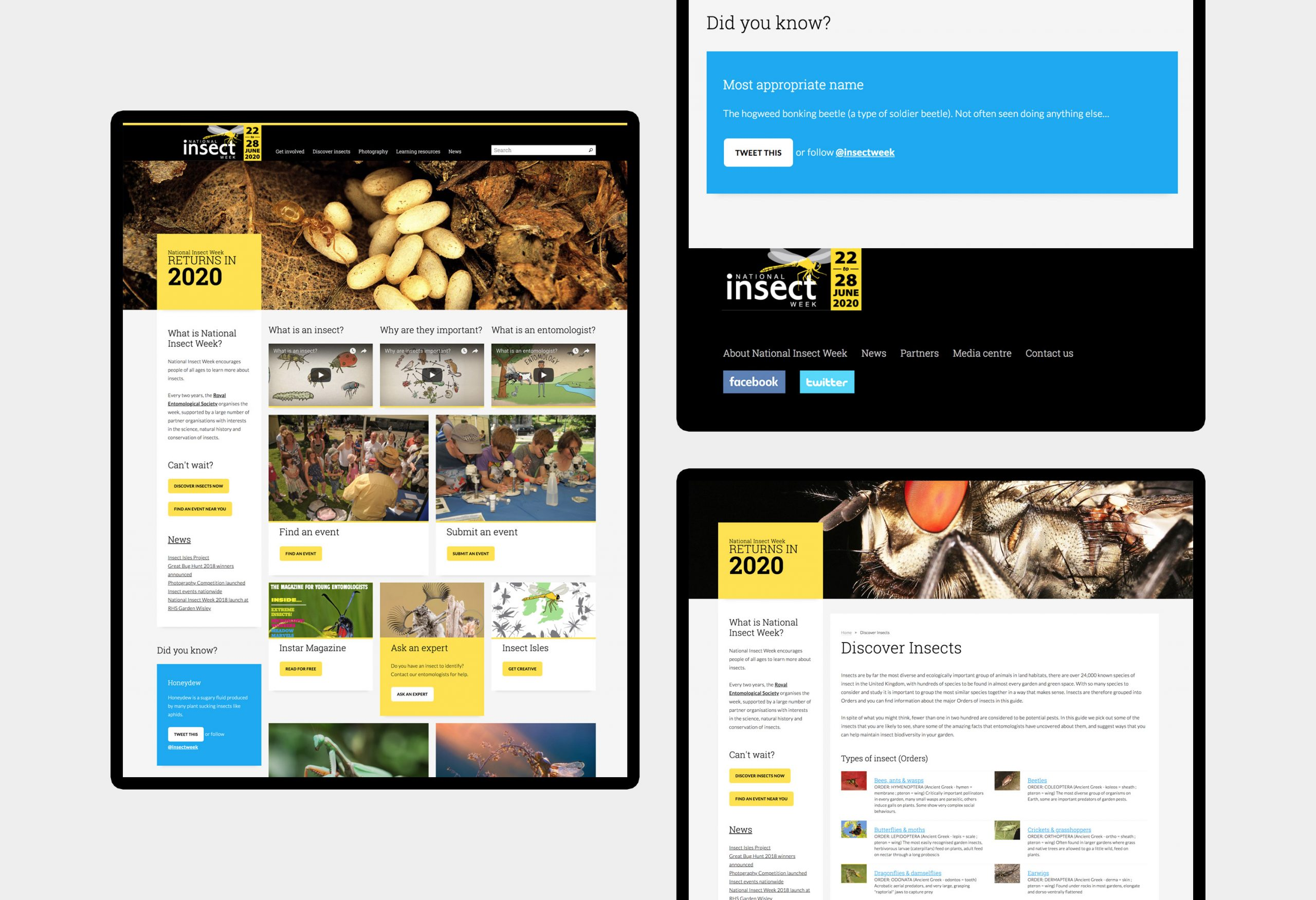 National Insect Week - website design